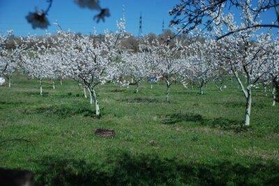 Над ереванcкими садами Далмы нависла угроза полного уничтожения։ Кочарян и Саргсян съели половину. Спасет ли сады Пашинян?