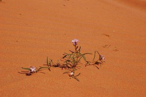 Цветы, увядшие в пустыне: замечательный фильм Ани Саакян о Геноциде армян. ВИДЕО
